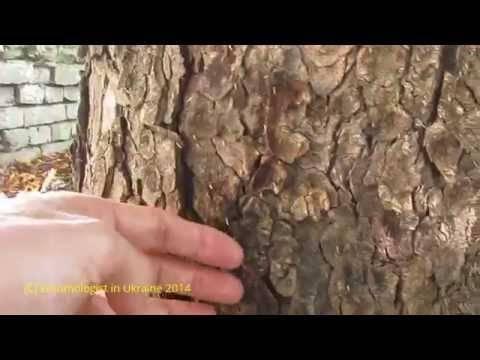 Защита растений от листовых минёров