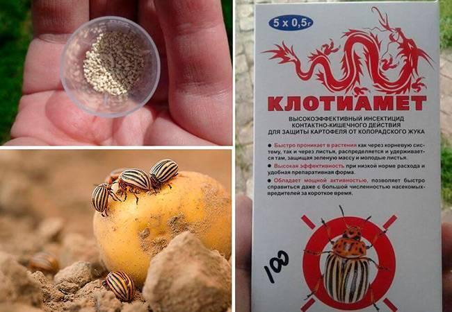 Особенности использования средства «регент» для обработки картофеля от колорадского жука