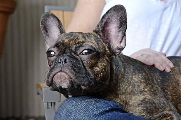 Собаку укусил клещ – последствия атаки паразита и первая помощь для питомца