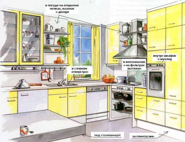 3 причины появления чёрных канализационных тараканов в квартире