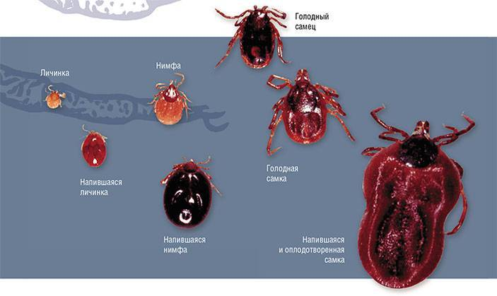 Средство 7в1: «иксодер, кэ» — от клопов, клещей, блох, тараканов, вшей, муравьев и комаров