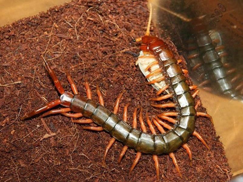 Может ли домашняя мухоловка представлять опасность для человека