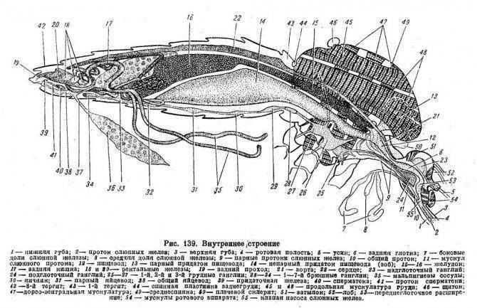 Зубы комара под микроскопом