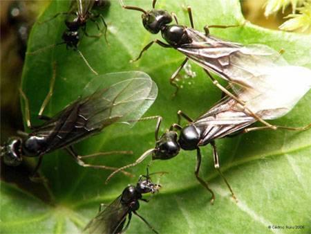 Способы избавления от древесных муравьев в деревянном и каркасном домах