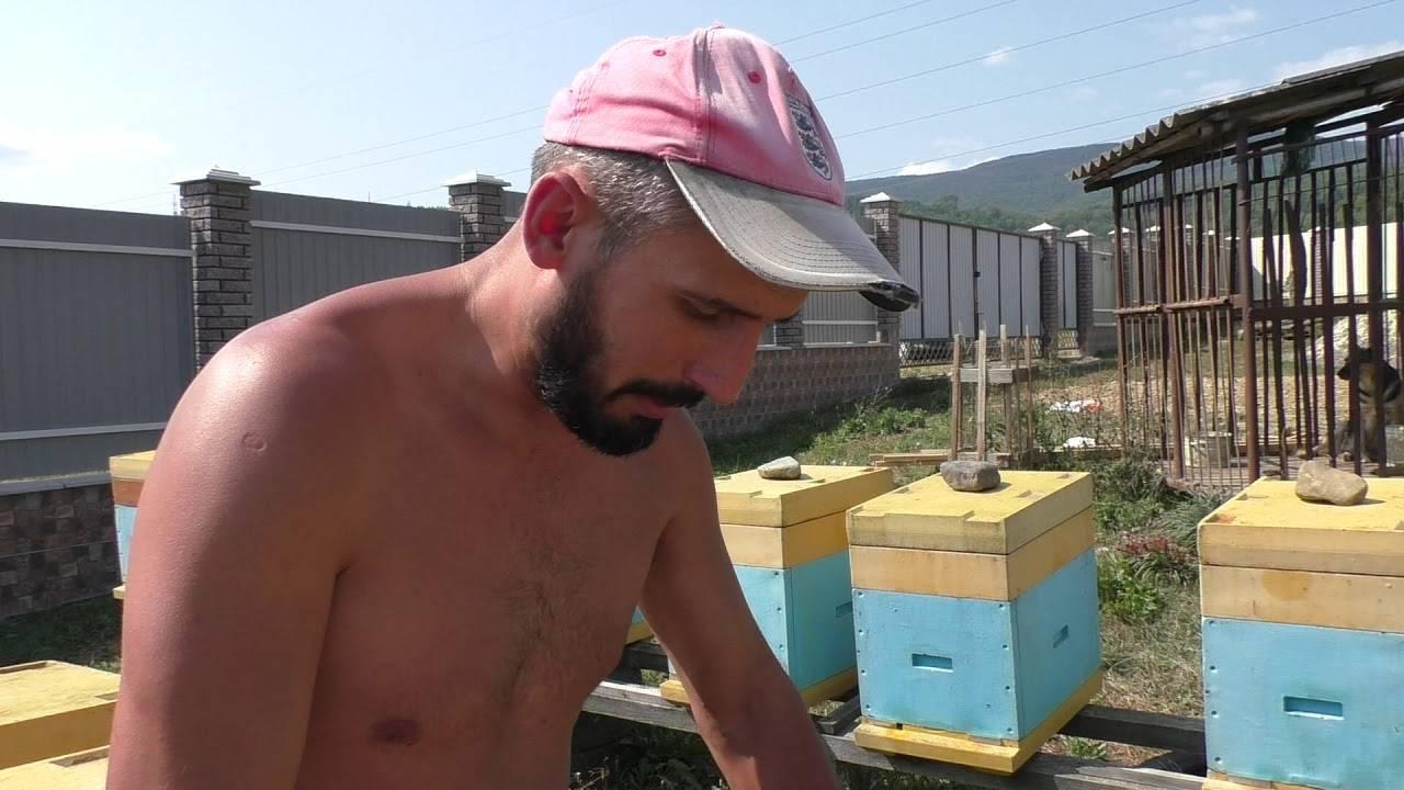 Порода пчел карника: их характеристика и особенности