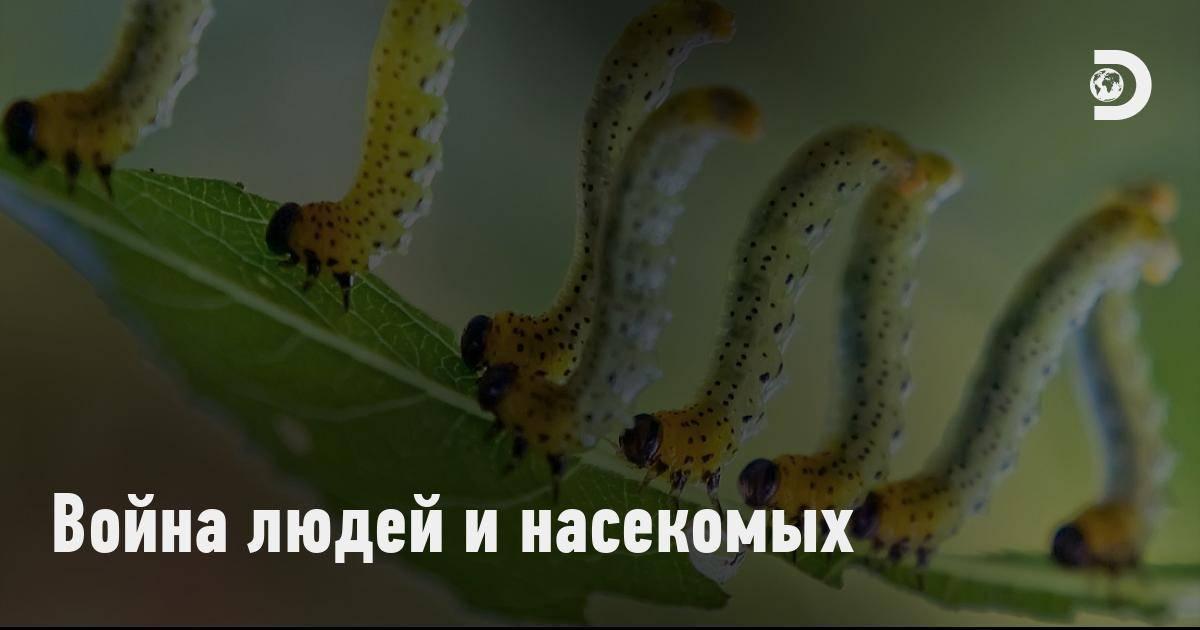Москиты: фото и описание опасного человеческого врага. положение при посадке на горизонтальную поверхность