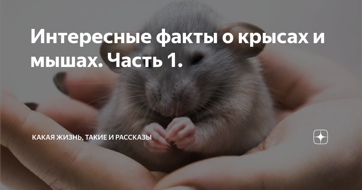Интересные факты про крыс для детей