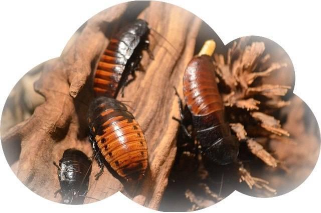 К чему снится много живых тараканов в доме и квартире