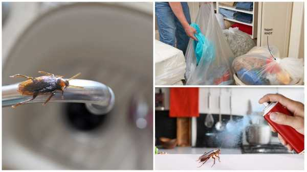 Препарат «гет» (get) от вредителей и паразитов