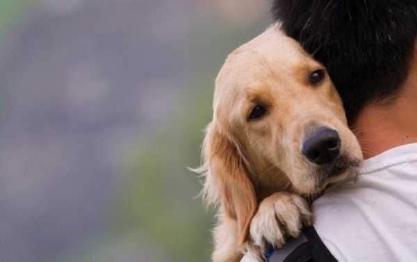 Вши у собаки — миф или опасное заболевание