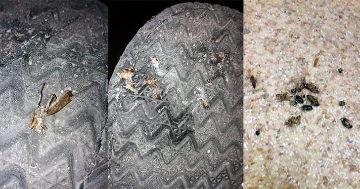 Куда пропали тараканы из квартир?