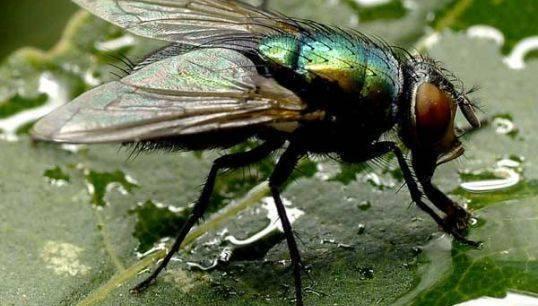 Почему осенью кусаются мухи? причины, фото и видео