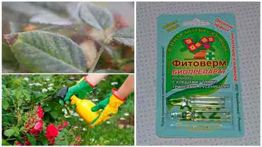 Как бороться с паутинный клещом на комнатных растениях самостоятельно