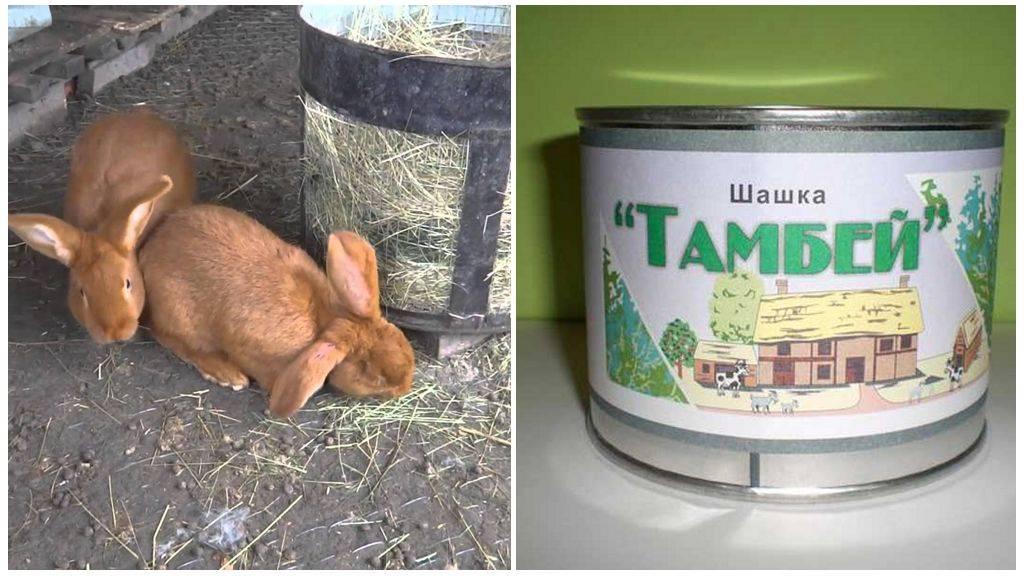 Как кролики переносят жару