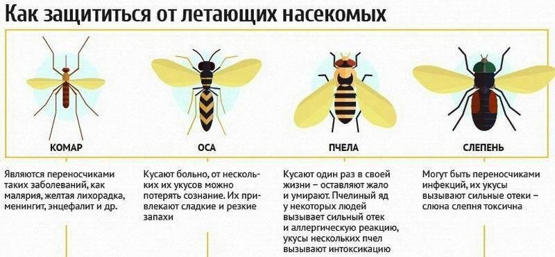 Укус осы – признаки, первая помощь и последствия
