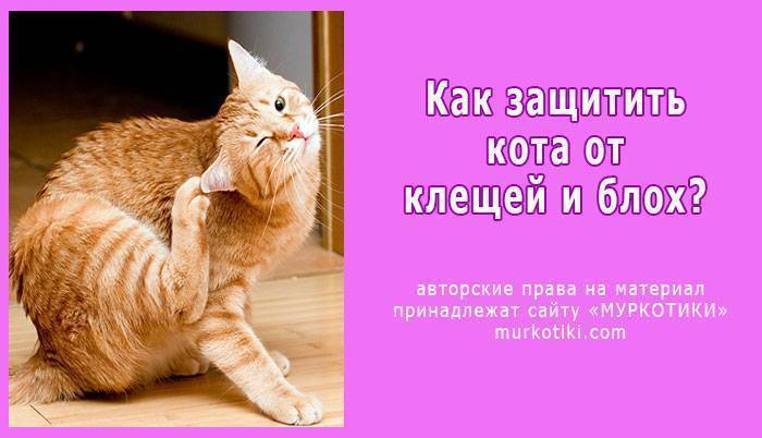 12 лучших средств от блох для кошек