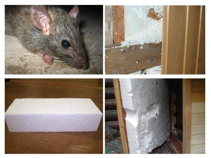 Пенопласт и мыши: чем обработать чтобы не ели