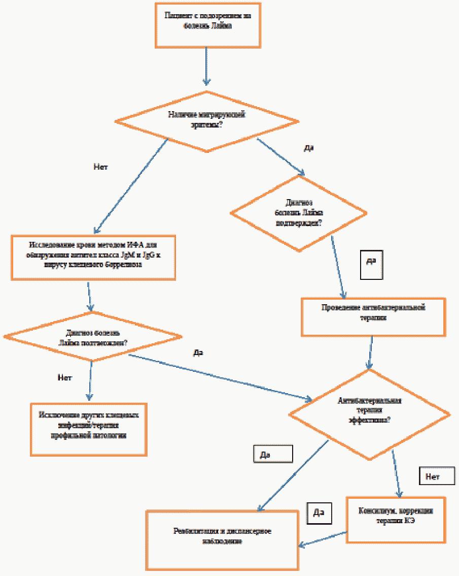 Клещевой энцефалит: как выжить после укуса