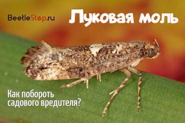 Средство от фруктовой моли. кто такая фруктовая моль? описание насекомого и меры борьбы. способы борьбы с фруктовой молью