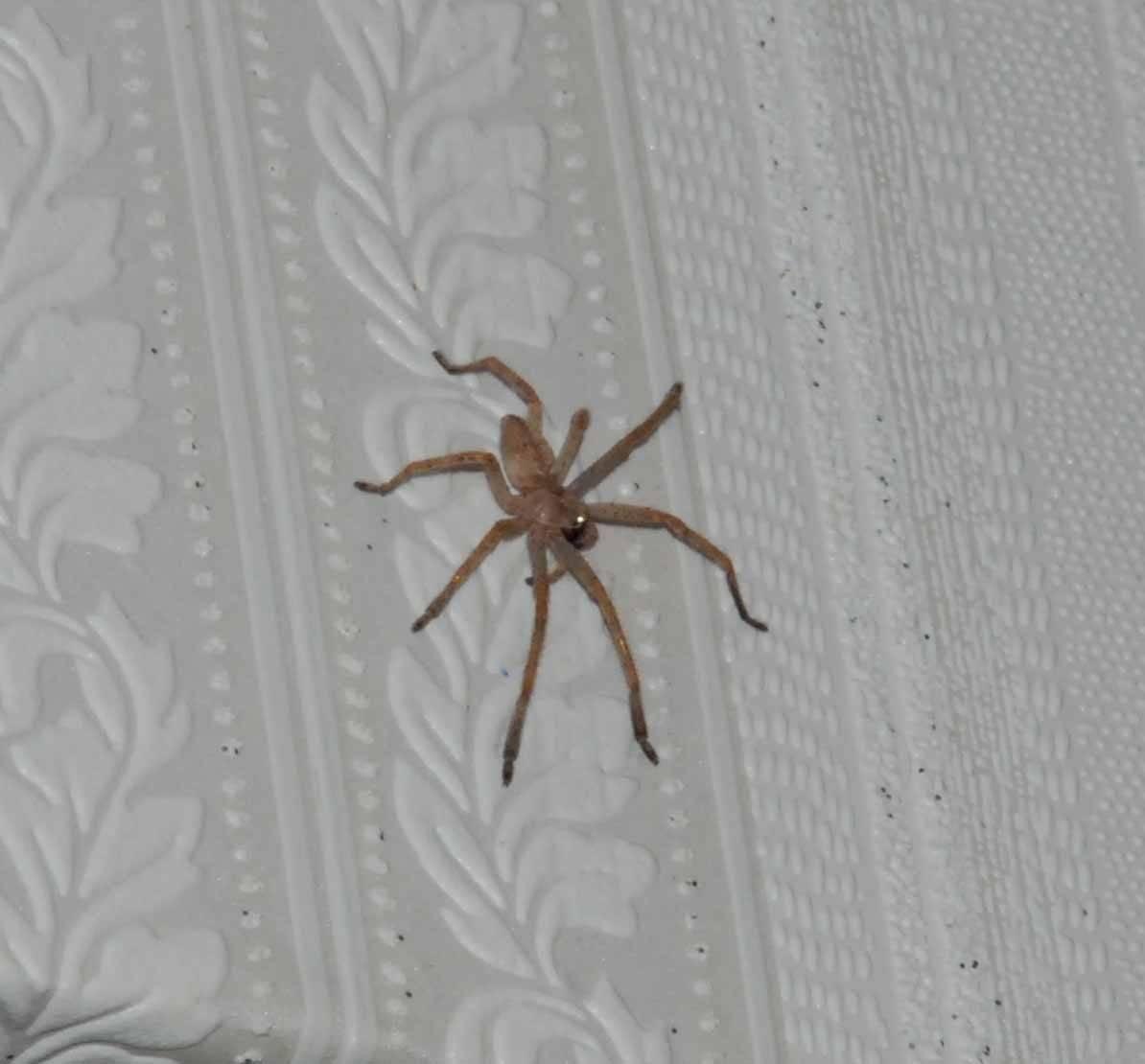 Как навсегда избавиться от пауков в доме