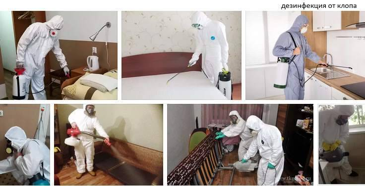 Как избавиться от постельных клопов в квартире