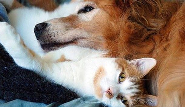 Могут ли кошачьи и собачьи блохи кусать людей: симптомы укусов и что предпринимать