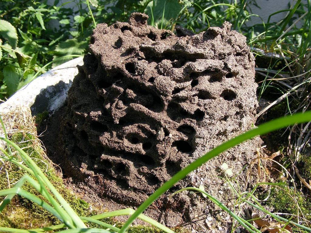 Черные муравьи на яблоне: как бороться с их нашествием?