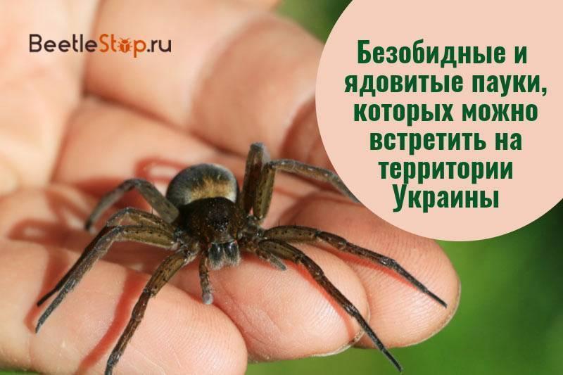 Пауки Украины: многообразие видов