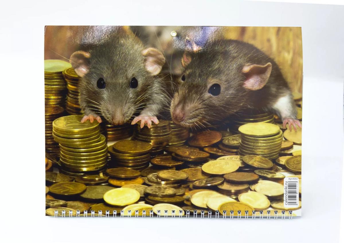 Честное и умное животное или интересное про крысу