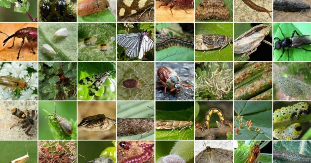 Все о тле: виды, фото, жизненный цикл и способы борьбы