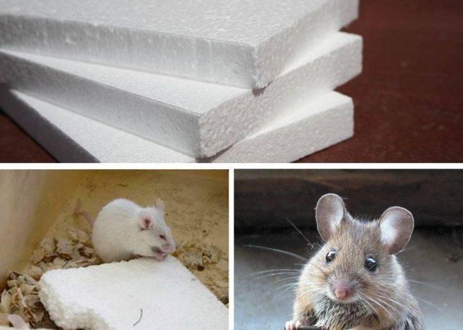 Какой утеплитель не грызут мыши и крысы, заводятся ли в эковате