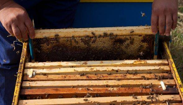 Поведение пчел зимой: особенности питания, что делают и как спят