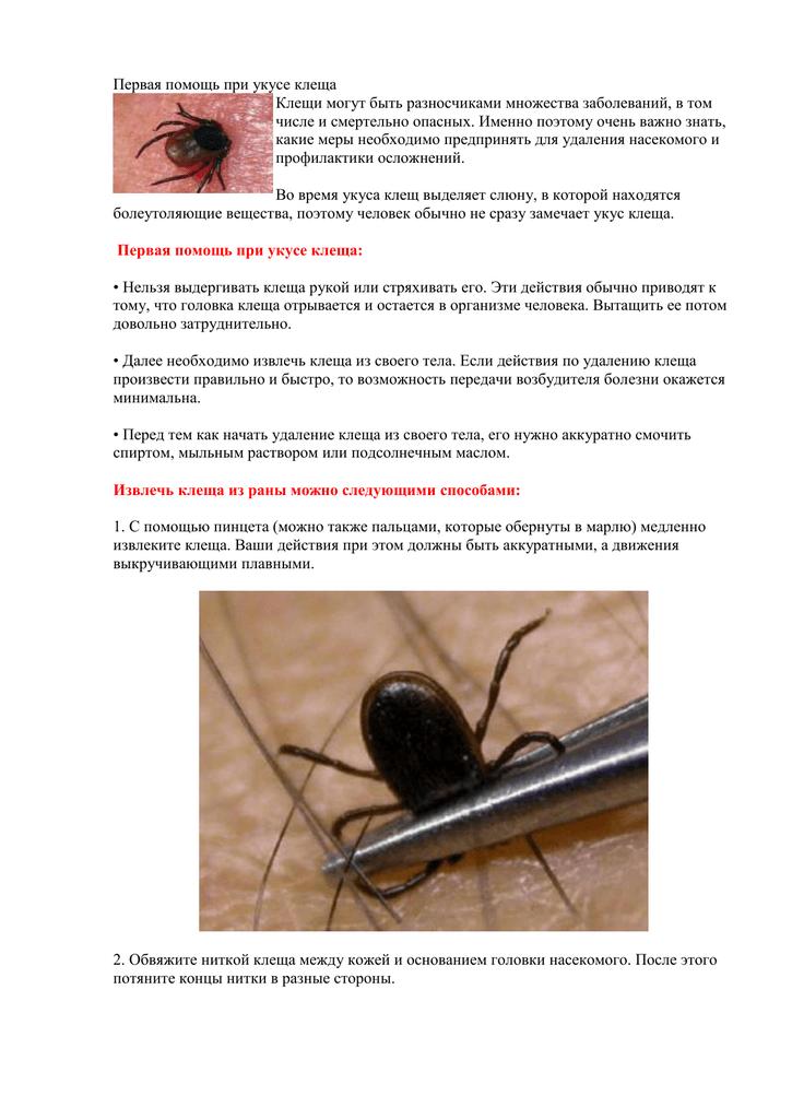 Чем опасен укус клеща?