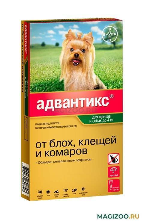 5 лучших способов, чем защитить (обработать) собаку от клещей