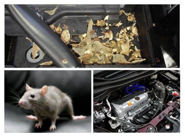 Мыши в машине, как от них избавиться