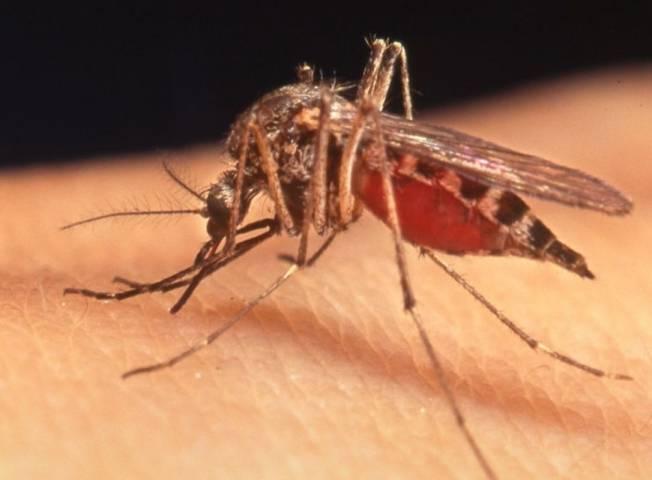 Почему комары одних людей кусают, а других нет