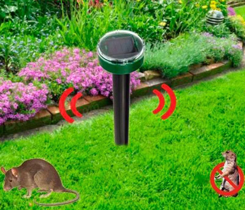 «медовая» угроза, листоблошки и медяницы на вашем огороде