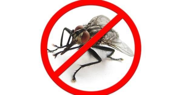 Делаем ловушки для мух своими руками — сладкие, клейкие и даже электрические
