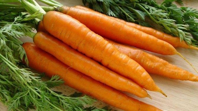 Популярные болезни и вредители моркови