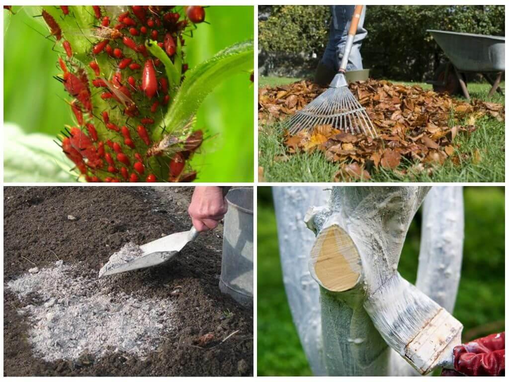 Тля — гроза садов и огородов
