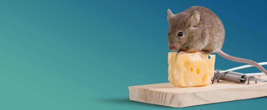 Едят ли мыши утеплитель пеноплекс