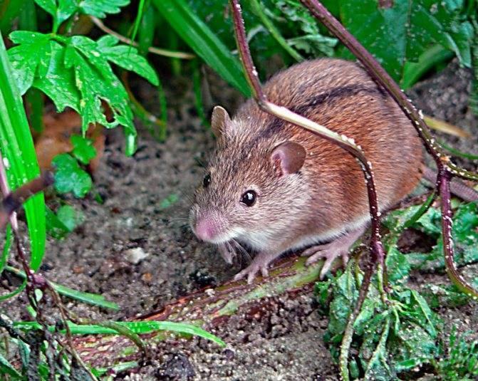 Летучая мышь в природе: чем питаются эти загадочные животные