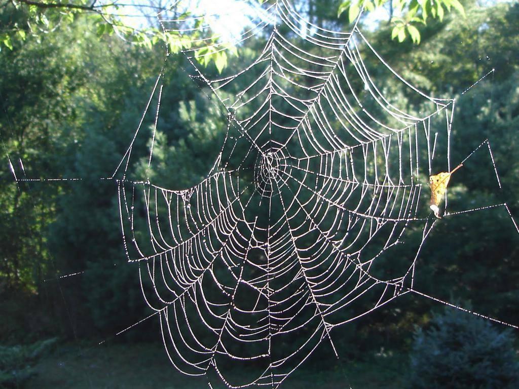 К чему снится паутина: видеть во сне паутину