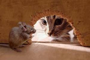 Как избавиться от трупного запаха дохлой мыши