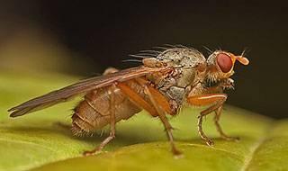 Как бороться с луковой мухой: признаки появления и методы борьбы