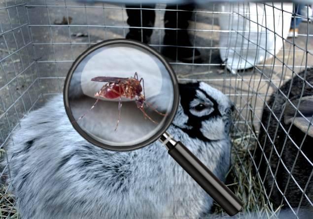 Боремся с вредоносными комарами в крольчатнике!