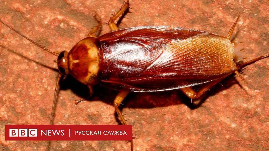 Где живут тараканы и как их найти?