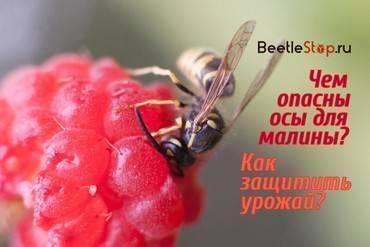 К чему могут сниться осы? полная расшифровка сновидений