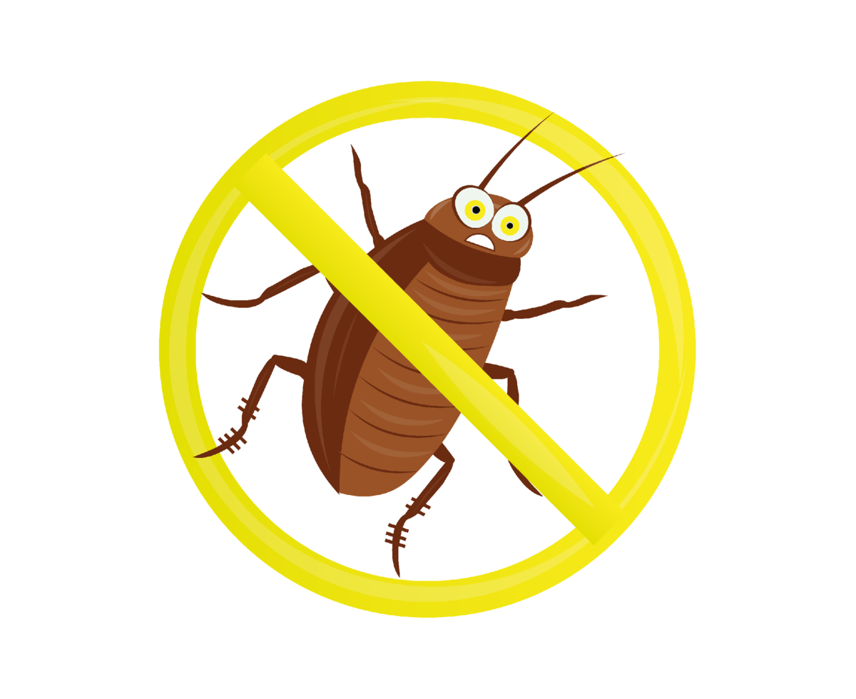 Как избавиться от тараканов в частном доме?