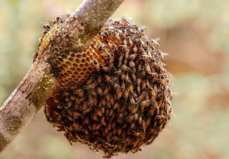 Правила подготовки пчел к зиме в сентябре: создание условий для зимовки пчелиных семей, формирование гнезда
